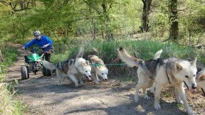 Husky-Aktivtag