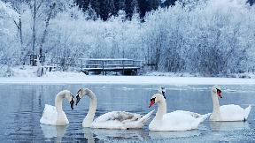 All Inklusive: Spreewälder-Wintermärchen inkl. Winter-Kahnfahrt