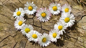 Romantiktag - Tageswellness für 2